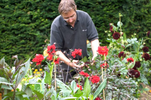 Max Fischer nurturing flowers in the garden